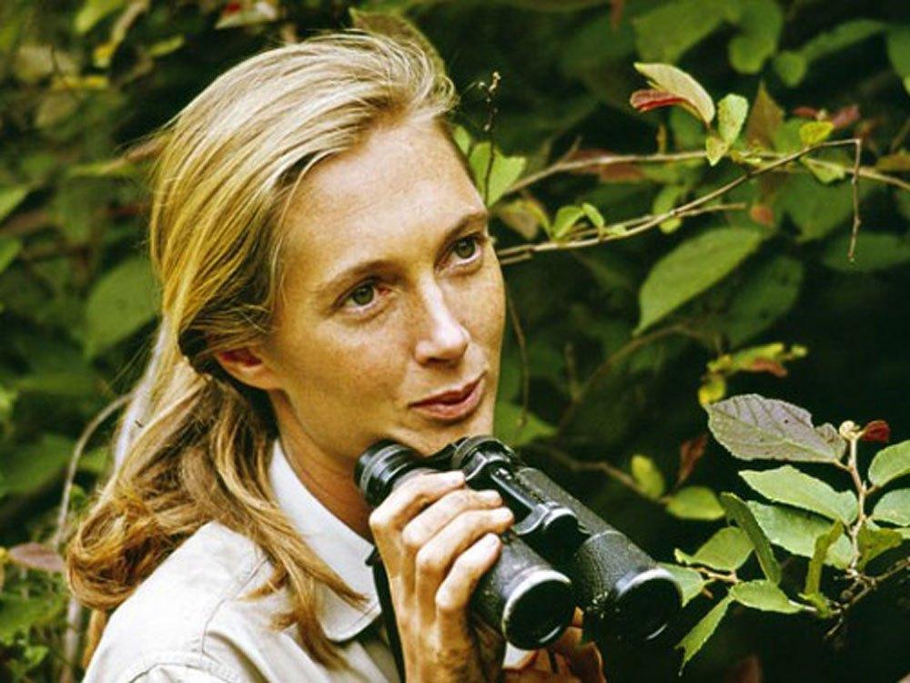 Jane Goodall - The Jane Goodall Institute